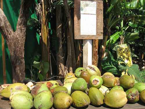 World Coconut Day Celebrated In India I See India